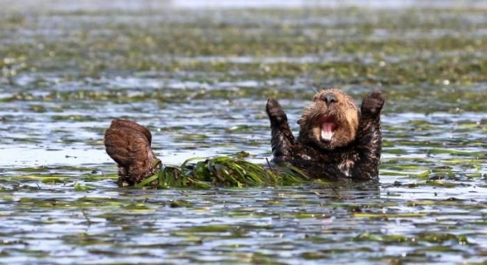 Финалисты конкурса комедийной фотографии дикой природы