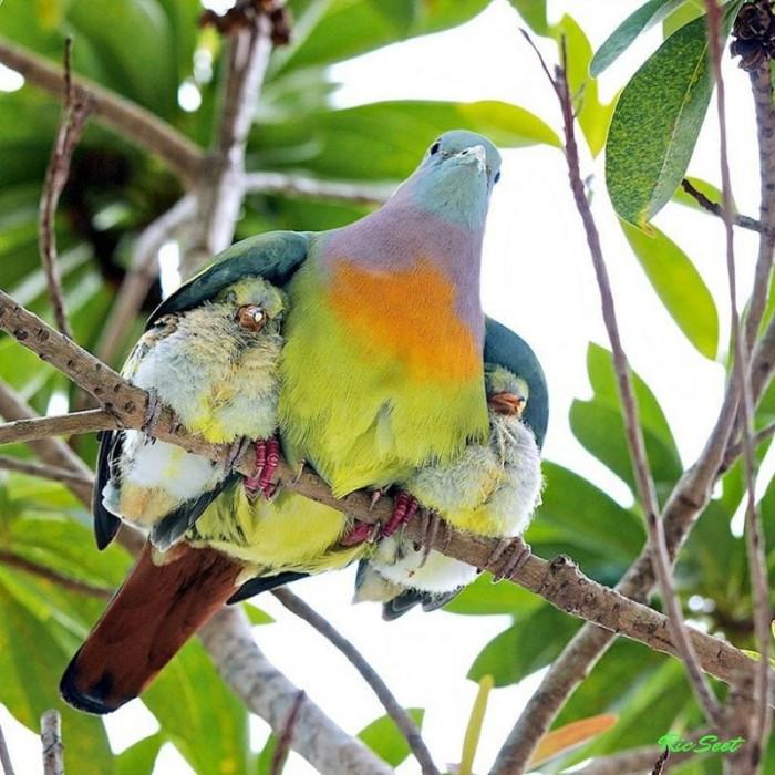 Мамы и их детки: путешествие по дикой природе (Фото)