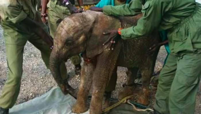 Слониха привела новорожденного слоненка к людям, которые спасли ей жизнь (+Фото)