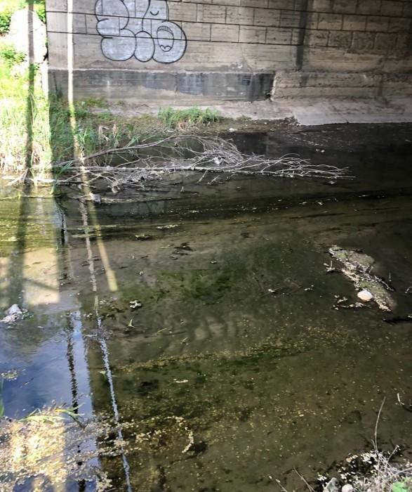 Река Бык: как она выглядела до карантина, и какой предстает сейчас (+Фото)
