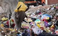 В Индии запретили использовать полиэтиленовые пакеты