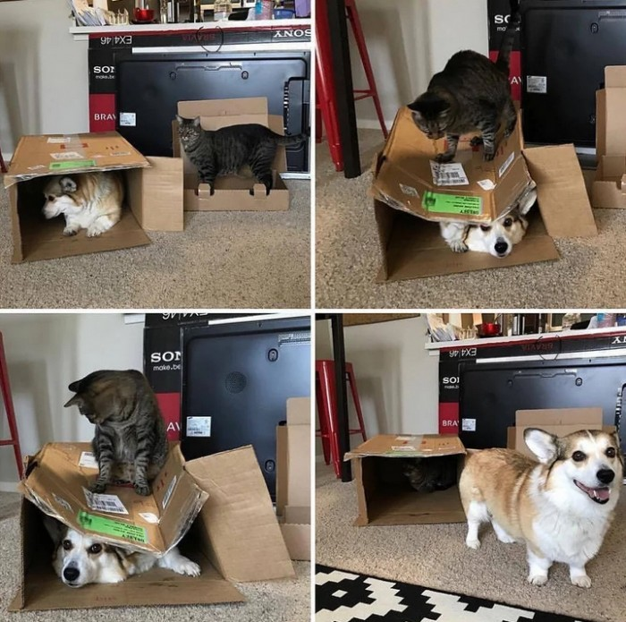 Чудесные примеры милой дружбы разных животных (Фото)