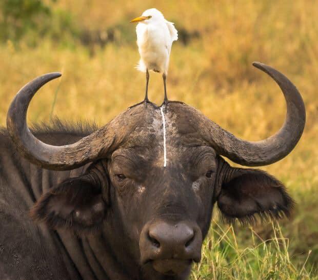 Комедия дикой природы (Фото)