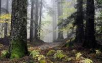 Чудесный лес (Видео)