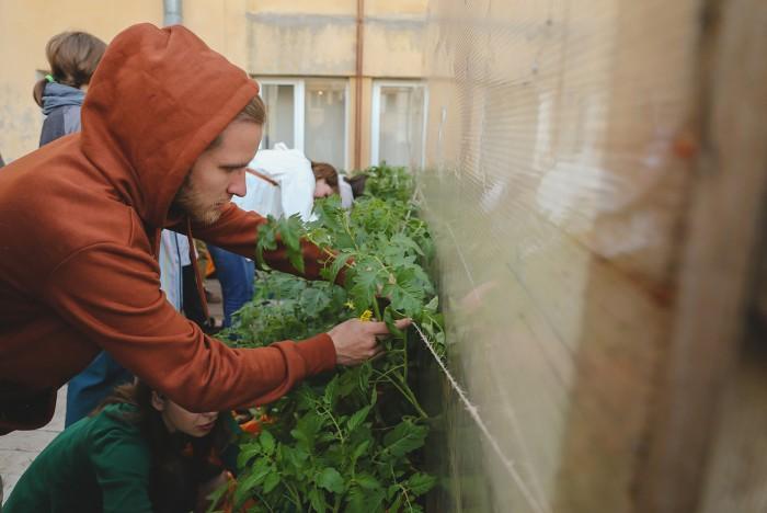 Городской огород - польза или вред для здоровья? (+Фото)