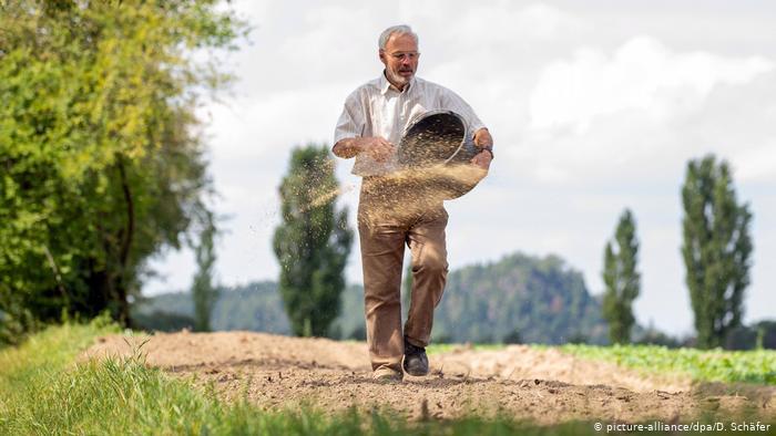 Немецкие фермеры посадили цветущую полосу - шесть раз вокруг Земли (+Фото)